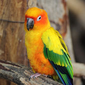 A beautiful blue and yellow macaw — Stock Photo