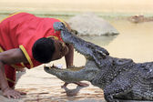 The trainer put head into the jaws of a crocodile — Stock Photo