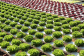 Farm of Hydroponic Plantation — Stock Photo