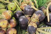 Asian Palmyra palm or Toddy palm — Stok fotoğraf
