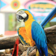 Macaw — Stock Photo #41805891