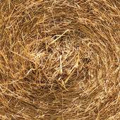 Bail of hay — Stock Photo