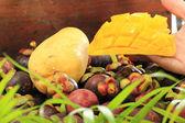 Peel mango — Stock Photo