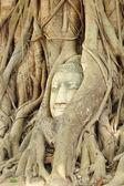 Boeddha hoofd in de hoofdmap van een boom — Stockfoto