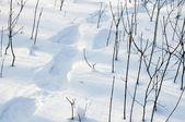 Pasos en la nieve — Foto de Stock