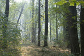 Autumn park landscape — Foto de Stock