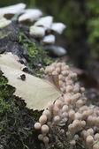 Mushrooms on a stump — Stock Photo