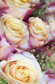 Rose flowers macro — Stock Photo