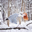 Beautiful girl sleeps in the air in the winter forest — Stock Photo