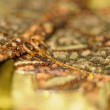 Golden wedding texture of sequins with two wedding rings — Stock Photo