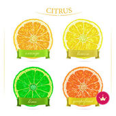 Set of citrus for food design. — Stock Vector