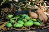 Green mangoes with coconuts on dry leafs — Stock Photo