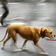 Walking the dog on the street — Stock Photo #34462609