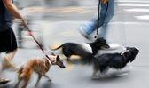 Прогулки с собакой на улице — Стоковое фото
