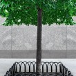 Fenced green tree — Stock Photo