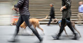 Walking the dog on the street — Stock Photo