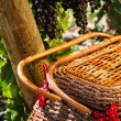 Picnic in Vineyard — Stock Photo #33707597