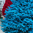 Flocked Christmas Trees — Stock Photo