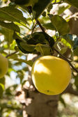 Orchards — Stock Photo