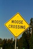 Moose Crossing — Stock Photo
