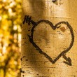 Stock Photo: Aspen Tree Hearts