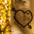 Aspen Tree Hearts — Stock fotografie