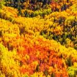 Aspen Trees — Stock Photo #34628243