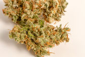 Marijuana Buds — Stock Photo
