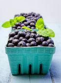 Fresh picked organic blueberries — Stock Photo