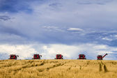 Large Red Combines Agriculture Equipment  — ストック写真