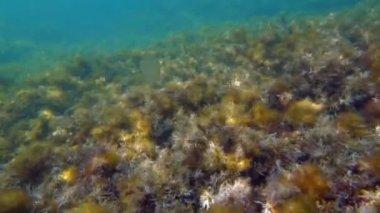 Underwater shot — Stock video