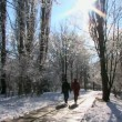 Stock Video: Couple walk in winter park