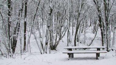 Winter park — Stock Video