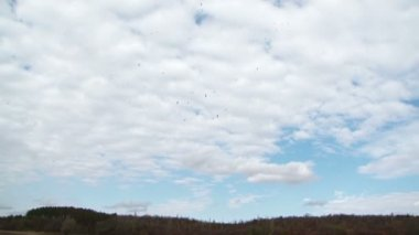 осенний пейзаж — Стоковое видео