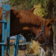 Stock Video: Horses In Paddock
