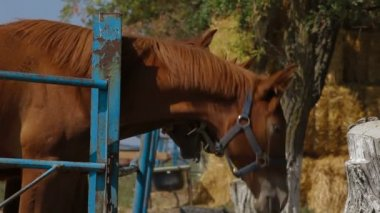 Horses In Paddock — Stock Video