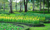 Parks Colourful Flowerbeds — Foto Stock
