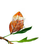 Motýlí Thajsko — Stock fotografie
