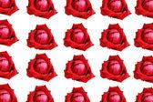 白い背景で隔離の赤いバラ. — ストック写真
