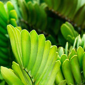 Beautiful green leaf background. — Stock Photo