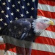 American Eagle Flag  — Stock Photo
