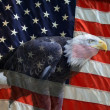American Eagle Flag  — Stockfoto