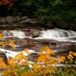 Stream Autumn Foliage — Stock Photo