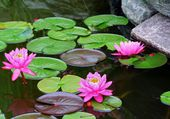 Pond with Lilypads — Stock Photo