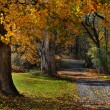 Wooded Autumn Path — Stock Photo