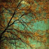 Autumn Tree Grunge — Stock Photo