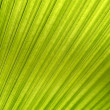 Palm Frond Background — Stock Photo #33980683