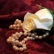 White Rose And Pearls — Stock Photo