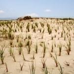 Dunes — Stock Photo #34255485
