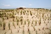 Dunes — Stok fotoğraf